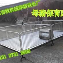 出售2.13.6仔猪育肥床母猪产子栏断奶小猪设备优质保育床