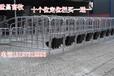 母猪定位栏热镀锌养殖定位栏老母猪定位栏母猪定位栏的优势