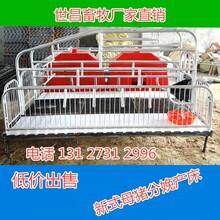 养殖设备母猪产床母猪产床规格母猪产床特点母猪产床厂家