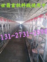 自动上料系统猪场自动化供料设备赛盘链条料线猪舍自动化供料料线