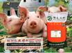 粉加粒教槽料7日后小猪吃的饲料