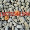 宣城陶粒,宣州陶粒,郎溪陶粒。建筑陶粒,回填陶粒批发