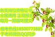 安徽淮北考施工证砌筑工证花卉工证绿化工证花街工考证时间