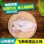 广东天农食品-清远冷链清远鸡岭南美食清远鸡做法图片