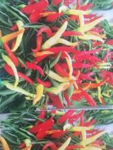 杭州供应观赏椒种子批发价格图片