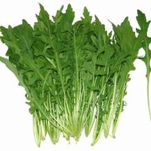 淄博芝麻菜種子圖片