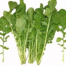 合肥芝麻菜種子供應商圖片
