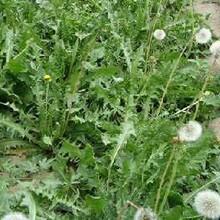 平顶山野菜种子价格图片