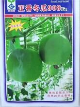 连云港香芋冬瓜种子价格图片