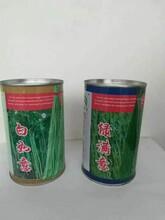 临沧特长豆角种子图片