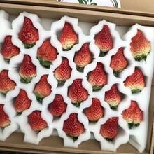 附近哪里有红颜草莓苗、红颜草莓苗上车多少钱图片