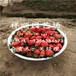 哪里有卖京留香草莓苗栽培与种植