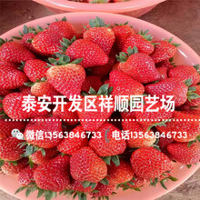 我想买石莓4号草莓苗基地哪里有、石莓4号草莓苗批发价格图片