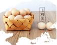 广东天农优品清远鸡清远鸡怎么做养农家土鸡营养价值图片