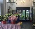 中意创展----新款商用鲜花展示冷藏柜鲜花保鲜冰柜存放鲜花冷柜风幕柜展示柜