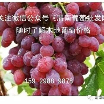 陕西省渭南市葡萄代办