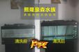 北京豪森水族专业水草海水鱼缸维护清洗服务价格实惠