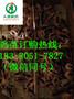 四川阿坝汶川县绿壳蛋鸡苗孵化场,绿壳蛋鸡苗品种图片