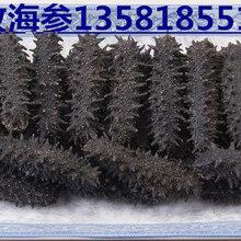 海参干货多少钱一斤哪里回收