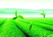 广西茶叶行业分销系统分销商城定制低价开发有源码
