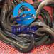 廣州魚苗場公司批發鰻魚苗花鰻白鰻及各種水產魚苗銷售