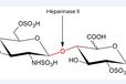 肝素酶II(heparinaseII)