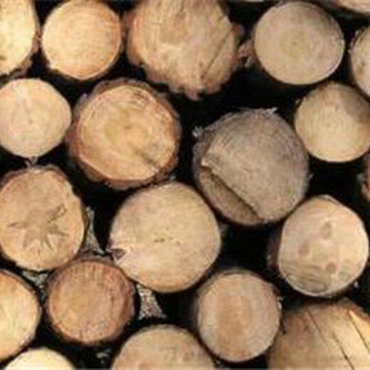 麝香木材18113356681