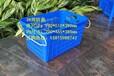 佛山喬豐塑膠廠家直銷砂糖桔筐塑膠筐水果筐砂糖桔框