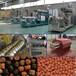 鼎润机械DSE水产饲料生产设备