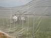 蔬菜種植紗網40-60目大棚防蟲網40-60目加密防蟲網
