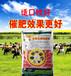 瘦牛怎么催肥快?牛羊催肥剂厂家直销批发牛羊催肥剂价格便宜