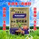 牛羊催肥劑廠家特價批發唯美牛羊催肥劑價格便宜