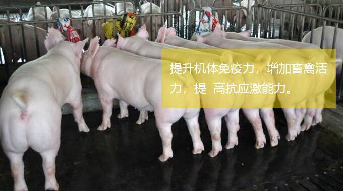 长春好的牛催肥剂牛羊快速增重用什么药