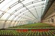 東北蘑菇大棚建什么樣的保溫效果好?