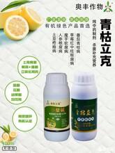魔芋软腐病叶斑病青枯病农药生产厂家推荐青枯立克配松脂酸铜图片