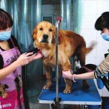 怎么给狗狗滴眼药?