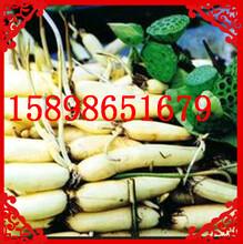 加工淀粉机器生产淀粉设备中国芭蕉芋淀粉机图片