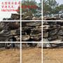 山东英石假山山东在哪里有英石批发用做大型假山石的大英石多少钱一吨图片