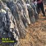 假山盆景石材批发市场高一米以上的盆景附树英石价格广东宏业奇石英石盆景石图片