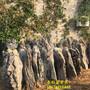自采自销精品附树英石、条形英石、精选峰石、英石盆景石价格实惠品质保证图片