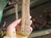 彭泽:哪里有锯末颗粒多少钱一吨现货直销