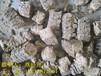 龙南:哪里有环保燃料木屑颗粒哪里最便宜