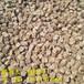 黄石市秸秆压块后多少钱每吨查询