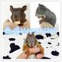 魔王松鼠批发魔王松鼠一年下几窝图片
