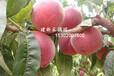 北京周边大型采摘园一日游140个果蔬大棚供您采摘