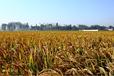 腾泰农业科技公司