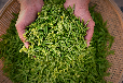 虔茶技巧:受潮的茶叶该如何拯救?