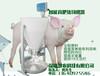 福建江苏安徽猪料槽粥料器智能育肥猪料槽慧农科技厂家招商