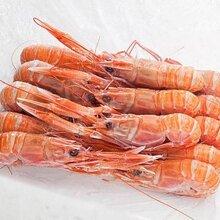 广州红虾进口报关_信息咨询
