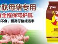猪如何快速催肥给猪催肥用什么好猪吃什么长的快猪催肥最简单方法图片